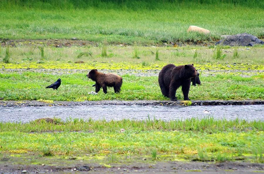 Fortress of the Bears Kayak & Camp - Above & Beyond Alaska