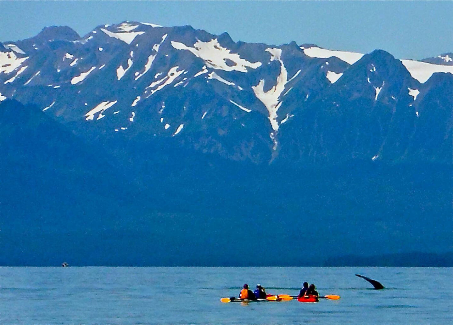 f8ff07f77 Paddle With Whales! Kayak Adventure - Above   Beyond Alaska